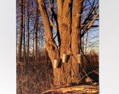Maple Syrup Postcard