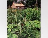 Farmhouse & Three Sisters Postcard