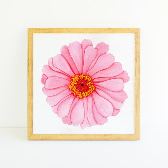 Bright Pink Zinnia Flower in Watercolor (11x11)