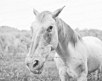 Horse Photo, Blue Ridge Parkway, North Carolina Photography, Nature Photography, Black and White Photo, Art, 8x10