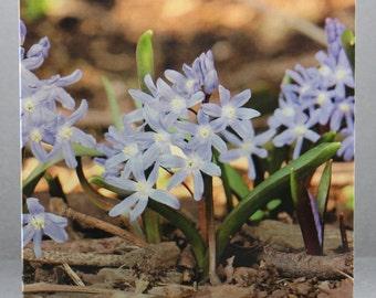 Dainty Flowers - Photo Card