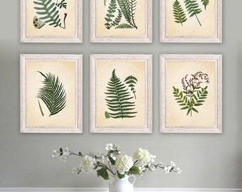 Antique Botanical Print Set. Botanical Art. Botanical Illustration. Botanical Vintage Art. Fern Art. Fern Print. Farmhouse Art.  NS790