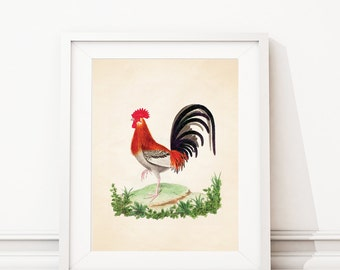 Rooster Kitchen Decor. Rooster Print. Rooster Art. Vintage Rooster Decor. Farmhouse Art. Farmhouse Decor. Kitchen Art. Dining Room Art. S451