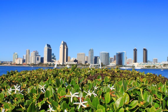 City Of San Diego Skyline Harbor Downtown Flowers San Etsy