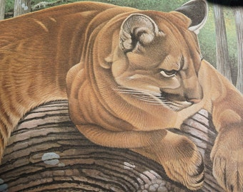 The Lofty Lookout, Robert Evans Younger Limited Edition numbered print Florida panther, 26x18