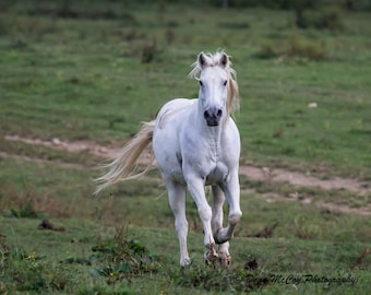 White Horse in Great Smoky Mountains National Park. #2904