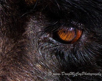 Eye of the Bear. #3169