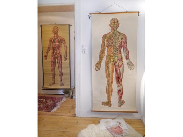 Anatomie-Plakat XXL große Rolle Diagramm Schulposter | Etsy