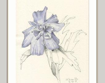 Hibiskus Zeichnung 1 Original Aquarell Und Bleistift Etsy