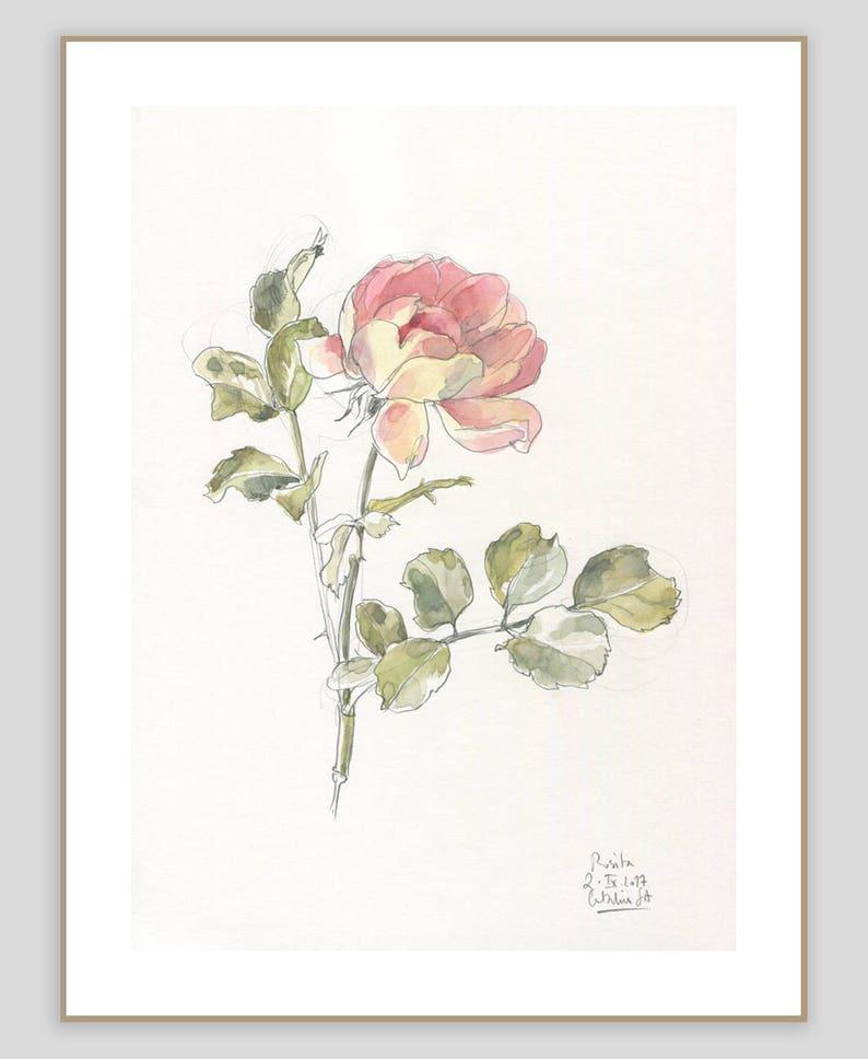 Rosa Dibujo Acuarela Rosa Original Y Dibujo A Lápiz Etsy
