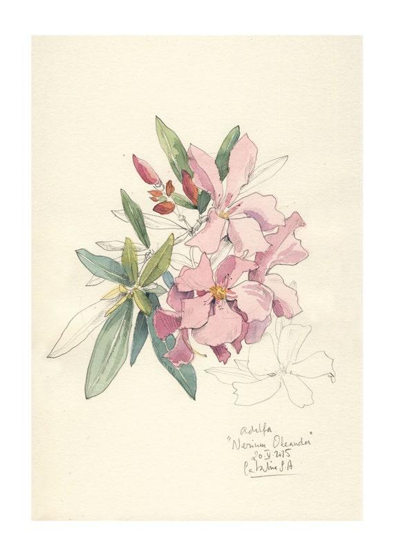 Dibujos Rosas Color Flor De Lápiz Wwwperfectoimagenescom