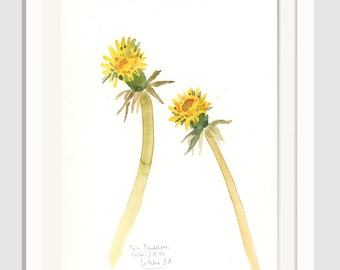 Two Dandelions watercolor painting - PRINT of this yellow flower- Dandelion botanical print by Catalina.