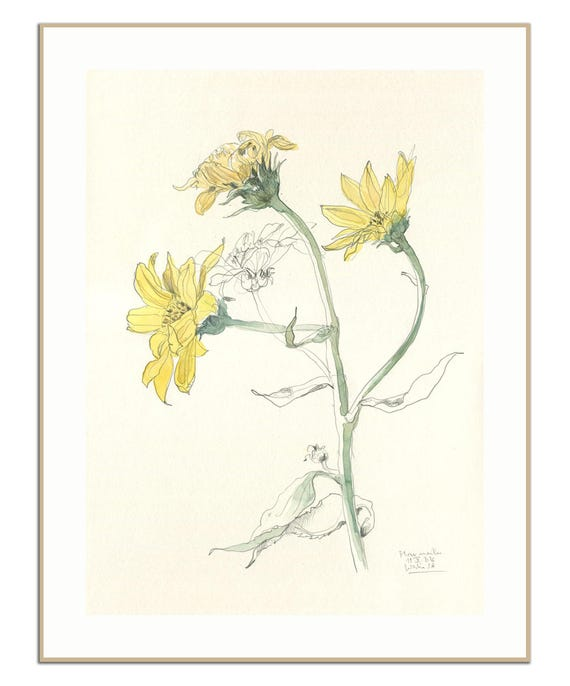 Yellow Flowers Print Pencil And Watercolour After Yellow Etsy