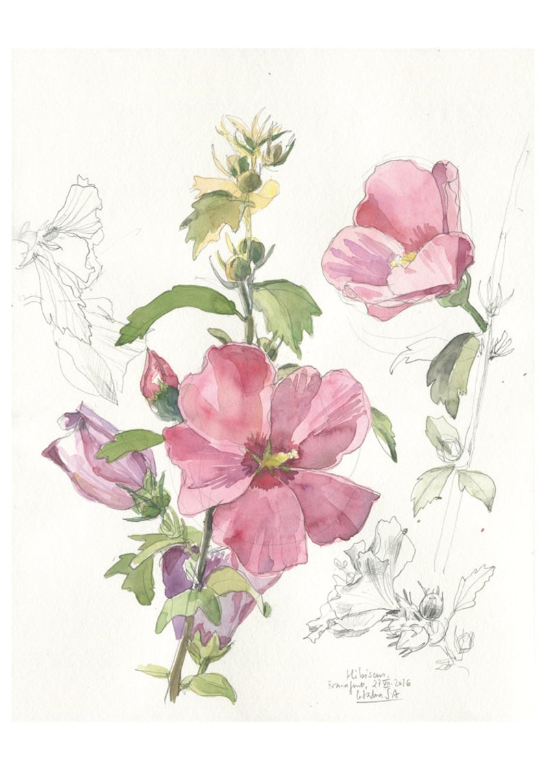 Hibiscus Flower N3 Floral Print Of Watercolour And Pencil Etsy