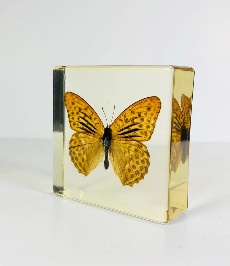 Image result for butterfly clear cast resin