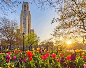 Springtime sunrise on Pitt's campus - Various Prints