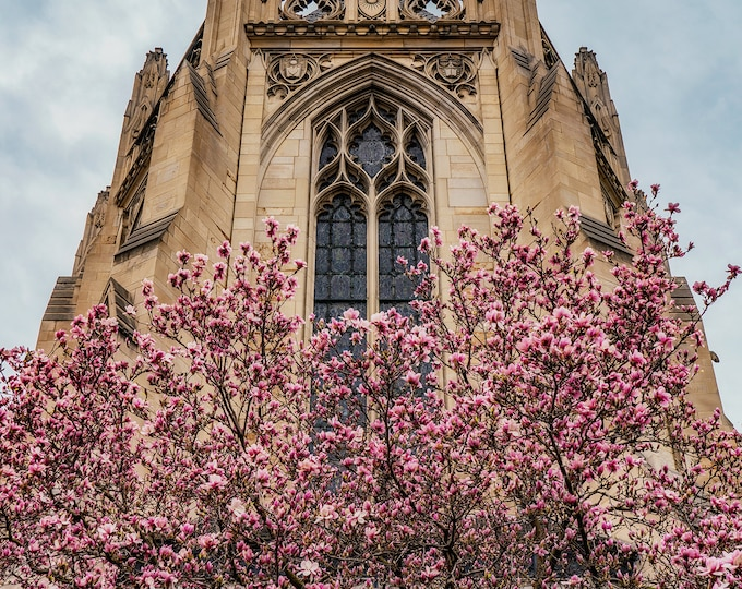 Spring and the Cathedeal - Various Prints