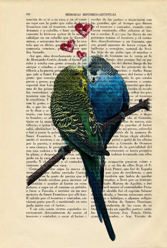 Kissing Budgies Valentine Birds in Love Budgerigar Parakeet   Etsy