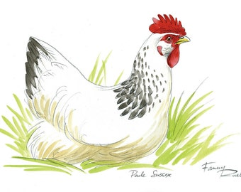 White Hen Sussex watercolor