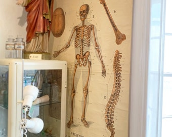 """1900's """"Skeleton"""" from W&A K Johnston's Series of Anatomy Charts - Edinburgh - Medical - Curio - Goth - Quirky"""
