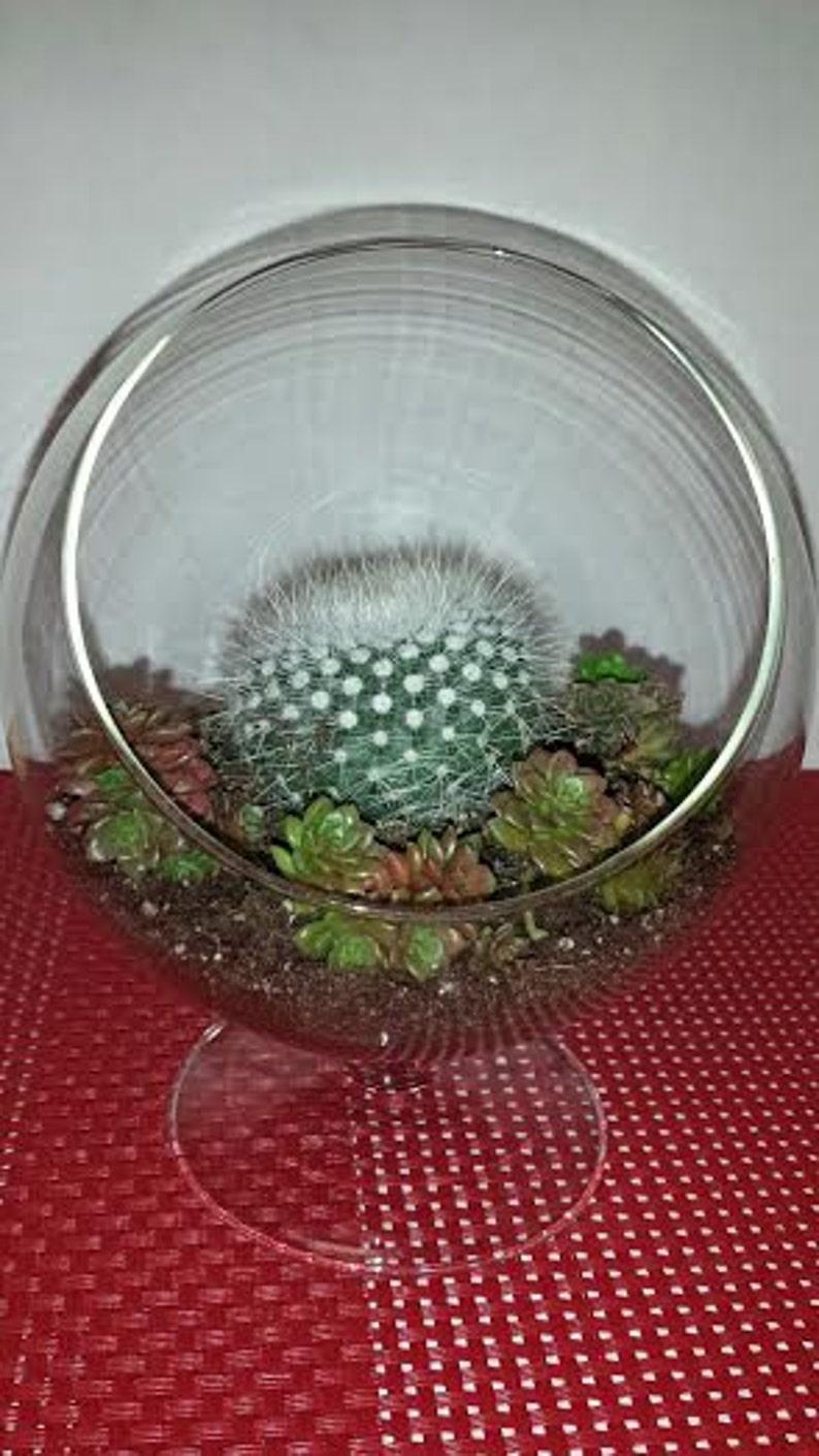 Succulent Cactus Plant Glass Pedestal Terrarium Diy Complete Etsy