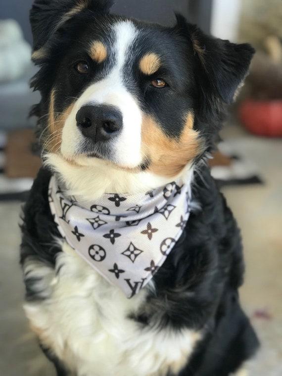 Shimmer~ Designer Inspired Dog Bandana