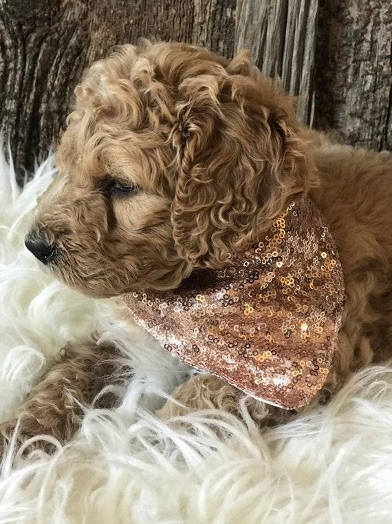 Rose Gold Sparkle And Shine Glam Dog Bandana