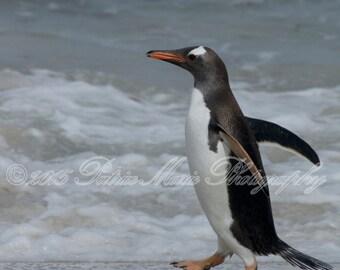 Penguin Skipping