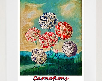 Carnations Botanical Art Print Flowers Decor Poster (ZT355)