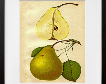 Botanical Art Pear Kitchen Decor