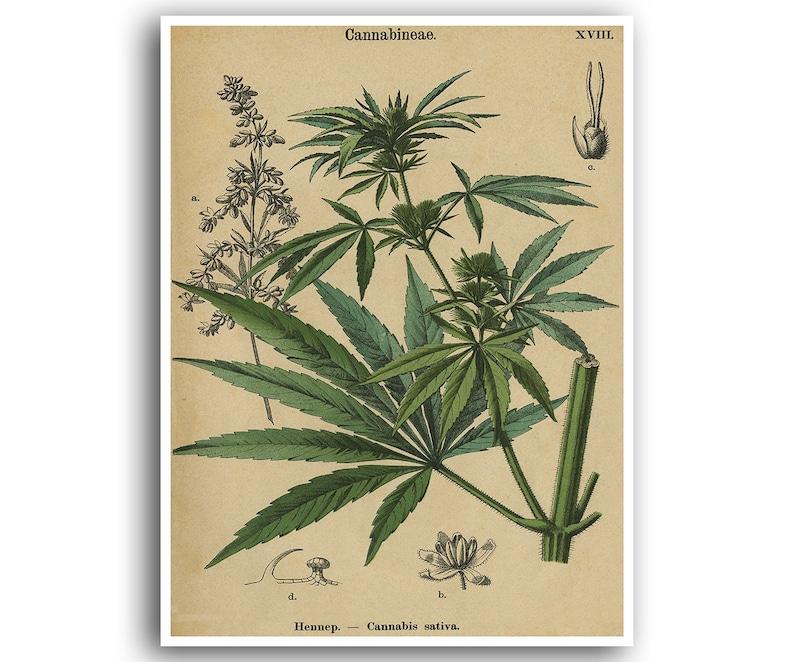 Marijuana Poster Cannabis Art Weed Print Hemp Plant Wall Decor Botanical 27