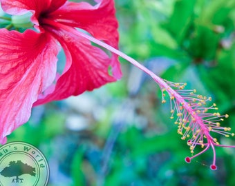 Plant Life Photography | Tropical Hibiscus | Digital Download