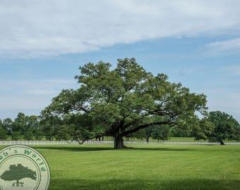 Landscape Photography   Majestic Tree   Digital Download