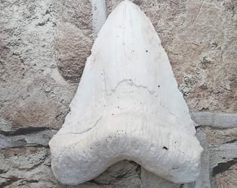 Uberlegen Megalodon Riesigen Hai Zahn Fossil Gips, Ihre Eigene Farbe Zu Malen