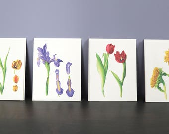 Set of 4 Botanical Drawing Note Cards: Hybrid Tulips, Iris, Red Tulips and Sunflowers