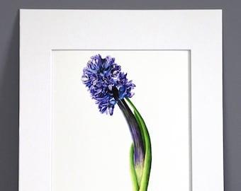 Hyacinth, Botanical Art Print