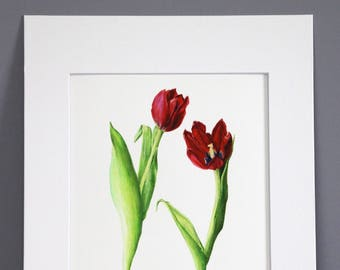 Red Tulips, Botanical Art Print