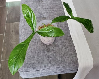 US SELLER. Philodendron 69686  #03 - Please read terms. - Please read terms.