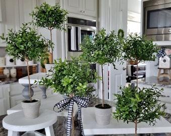 Miniature Boxwood Topiary