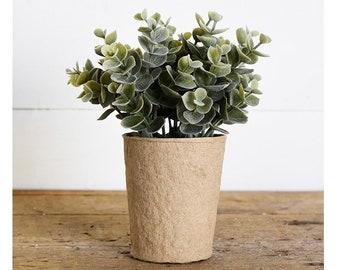 "6.5"" Eucalyptus on Paper Pot"