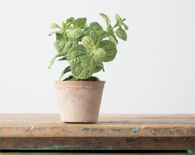 "8.5"" Mint Potted Plant"