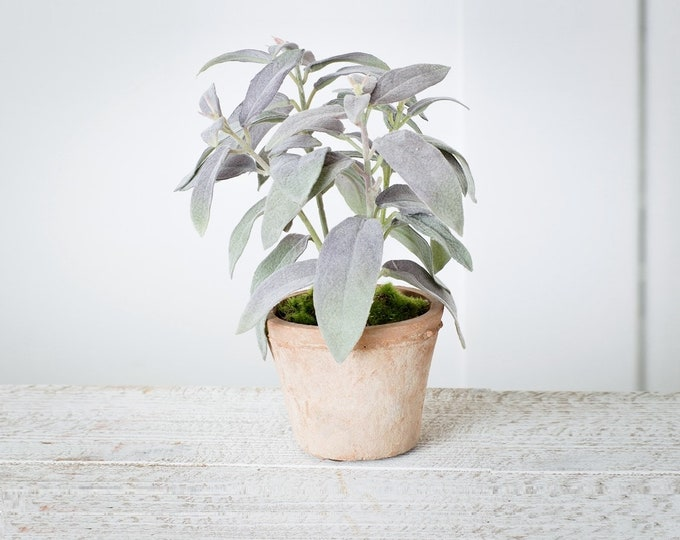 """8.5"""" Sage Potted Plant"""