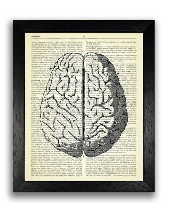 Anatómica cerebro dibujo Diccionario lámina Poster de | Etsy