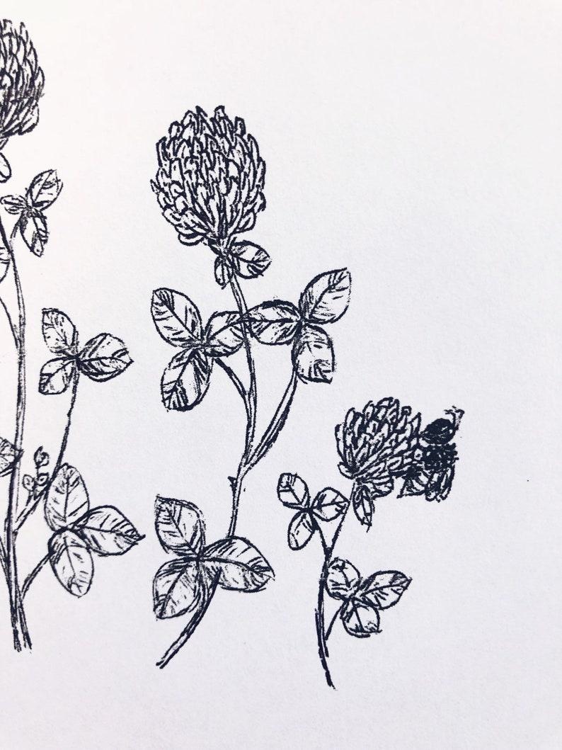 Red Clover honey bee Print ink pen, nature, herb, botanical sketch