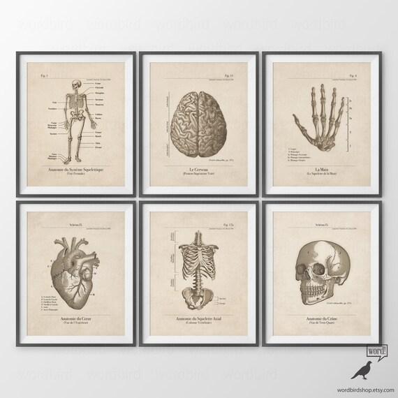 Human Anatomy Posters Set Of 6 Human Anatomy Prints Vintage Etsy
