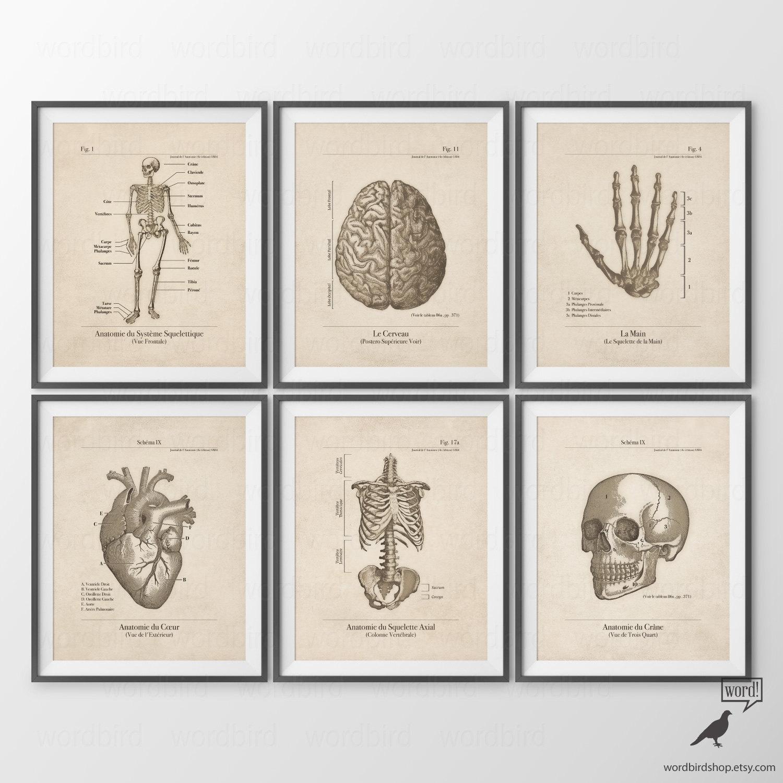 Beste Leben Größe Anatomie Poster Fotos - Anatomie Ideen - finotti.info