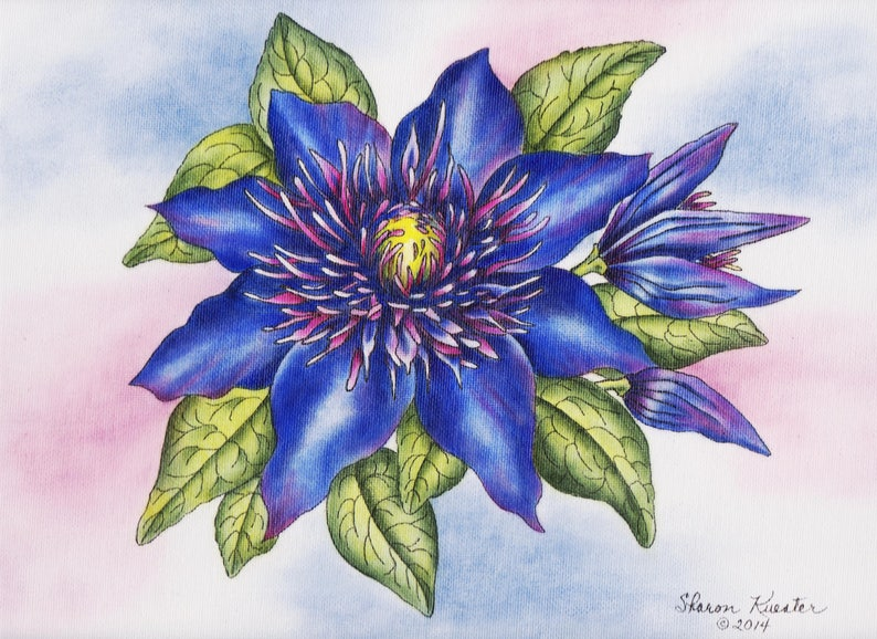 Art Kit Flower E Packet Clematis Flower Painting Pattern Instructional Painting Packet E PACKET Pen /& Ink Oil Rouging Painting Kit