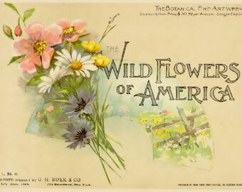 Printable Vintage Flower Book Wild Flowers of America Volume 1 No. 11 Flowers of Every State in the American Union PDF American WildFlowers