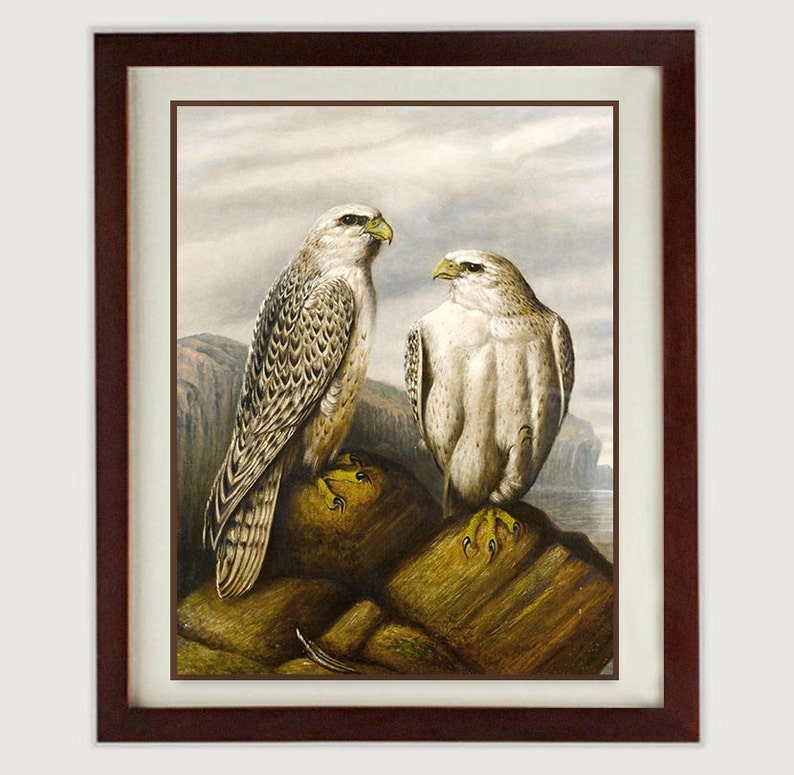 1ced40e3100 Bird Falcon Wall Art Vintage Style Print Poster Wall Art Old
