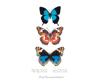 Butterfly Art Print | Blue Orange Butterfly Wall Art | Scientific Nature Illustration Lepidoptera | Watercolor Home Decor Poster